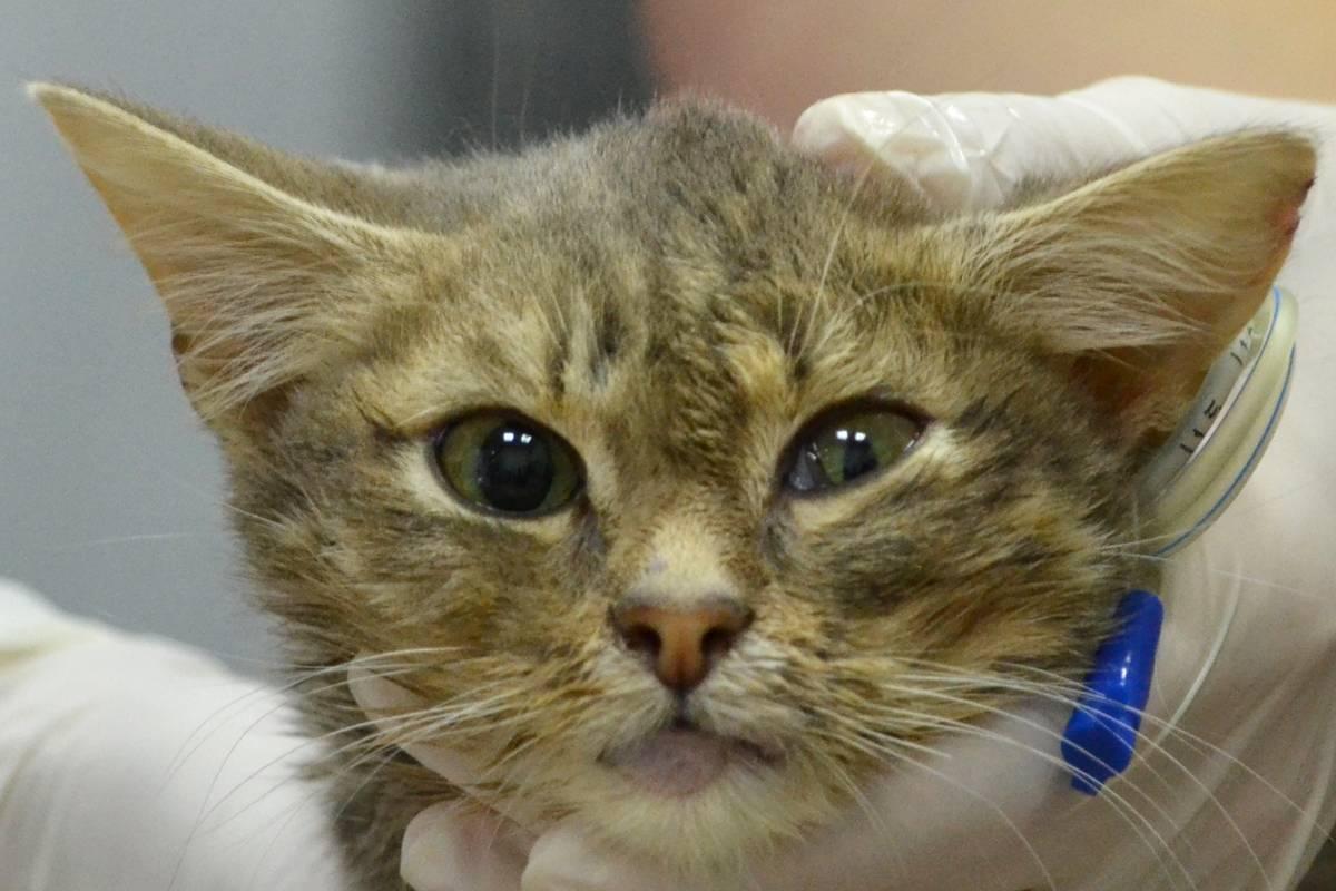 Сильное сотрясение мозга у кота: причины, симптомы и лечение кошки