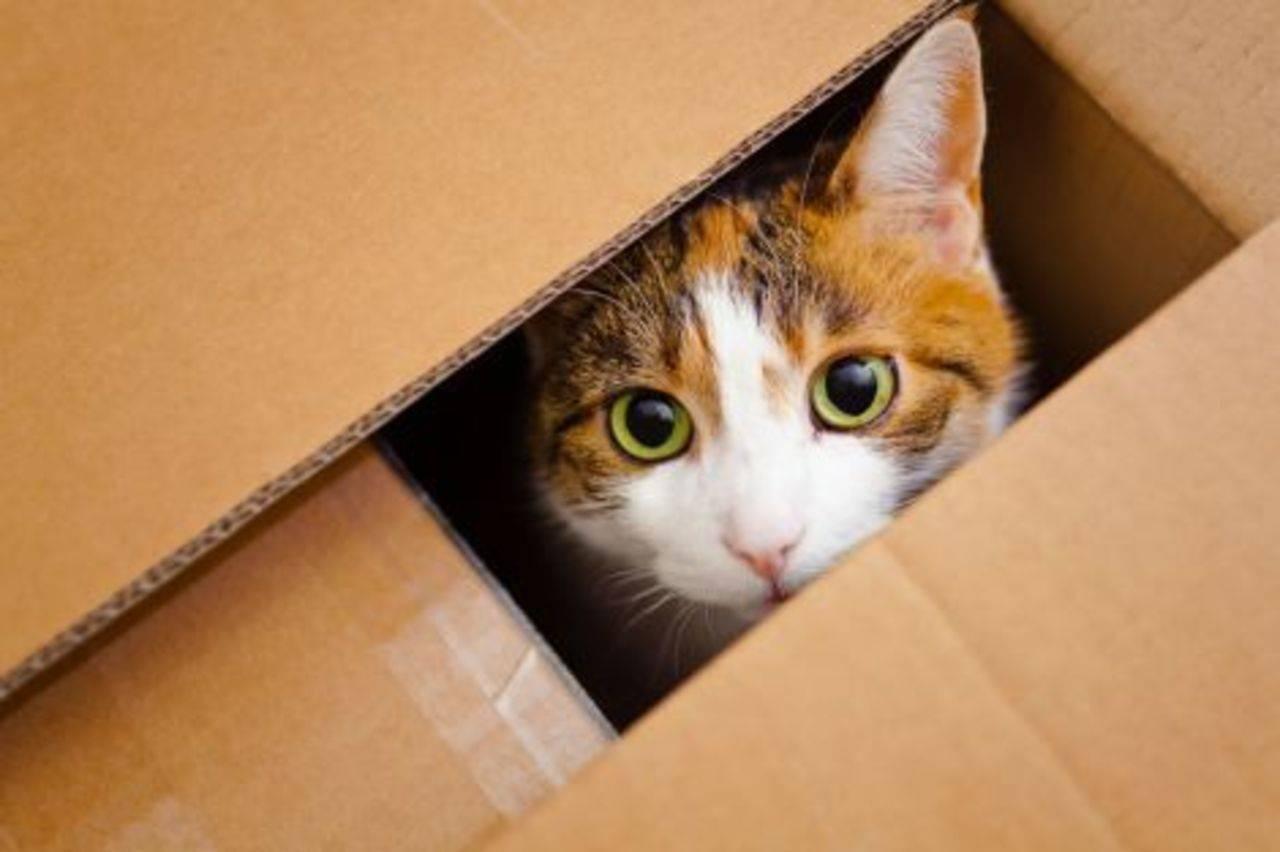 Куда лучше всего деть кошку или маленького котенка, если их никто не хочет брать