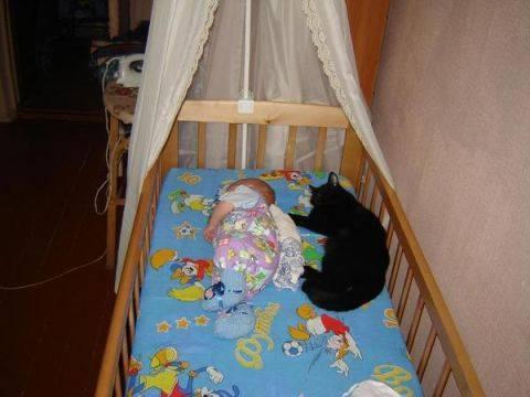 Новорожденный ребенок и кошка в квартире