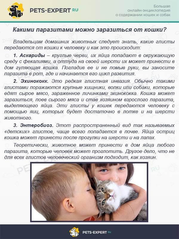 Заразиться глистами от кошки возможно