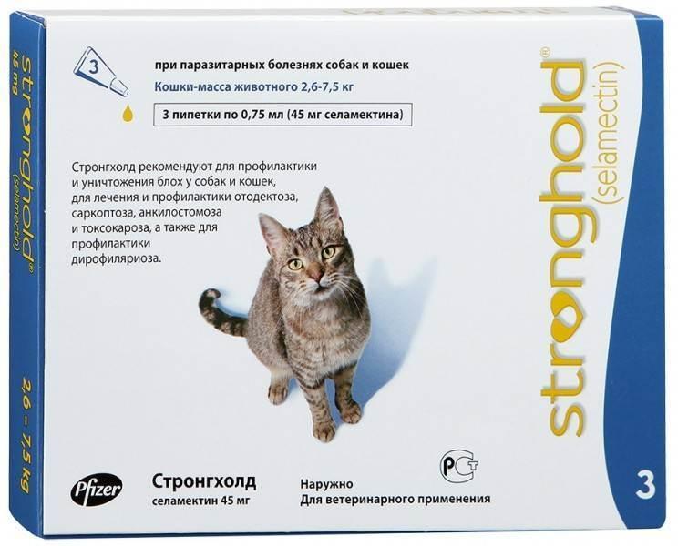 Стронгхолд для кошек - назначение, эффективность и частота применения средства