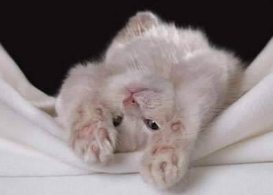 Мягкие лапки любимой кошке... - мягкие лапки для кошек отзывы - запись пользователя олеся (olesya21_86) в сообществе домашние животные в категории кошки. болезни, прививки, советы по уходу - babyblog.ru