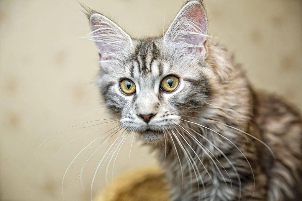 Зачем кошки усы. какие функции выполняют усы кошек
