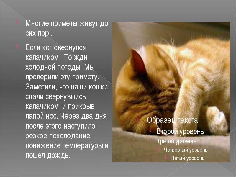 Кошка в доме: приметы и поверья