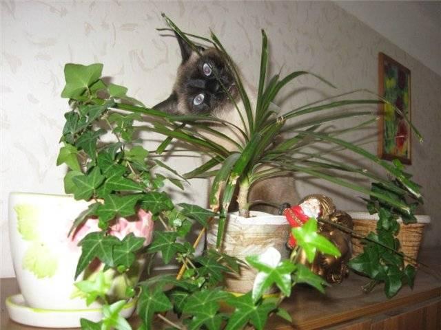 Защищаем комнатные растения от кошки