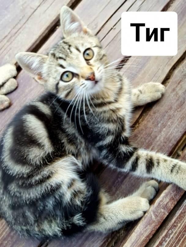 Кошки и их хозяева: любят ли коты своих хозяев и могут ли их забыть?