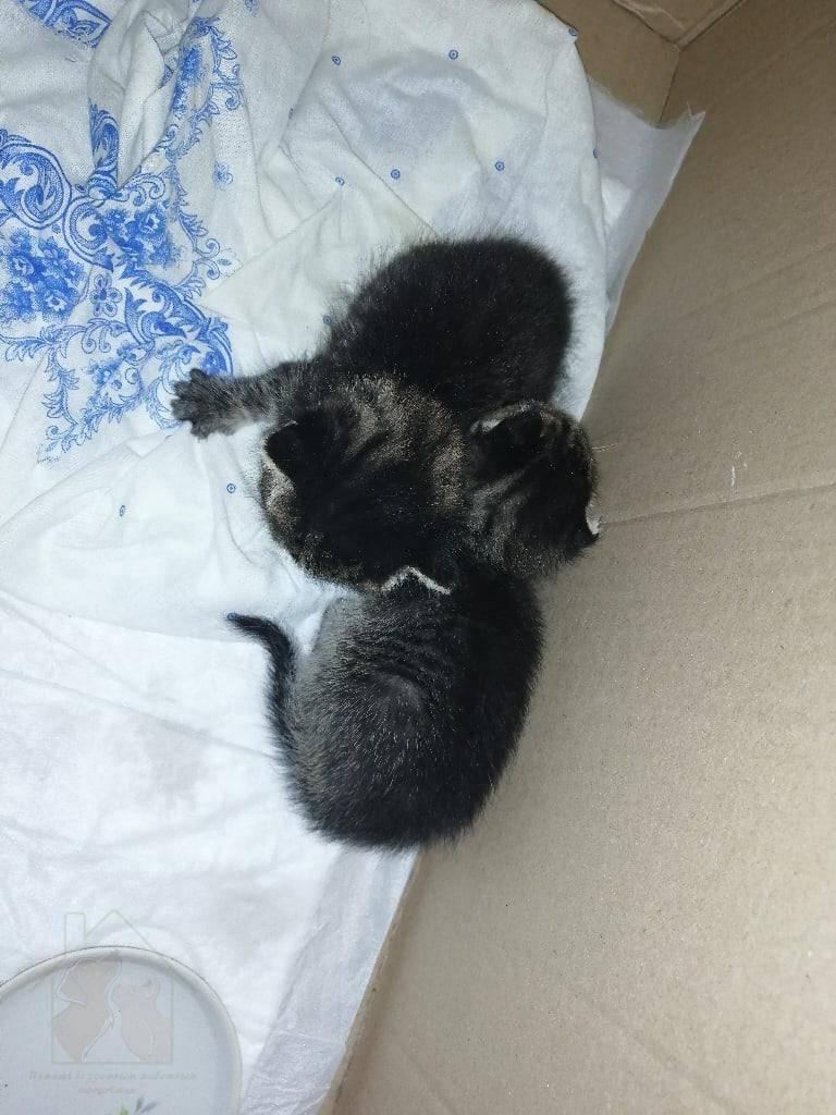 Когда котята начинают есть самостоятельно, особенности питания новорожденных, приучение к миске, рацион в переходный период