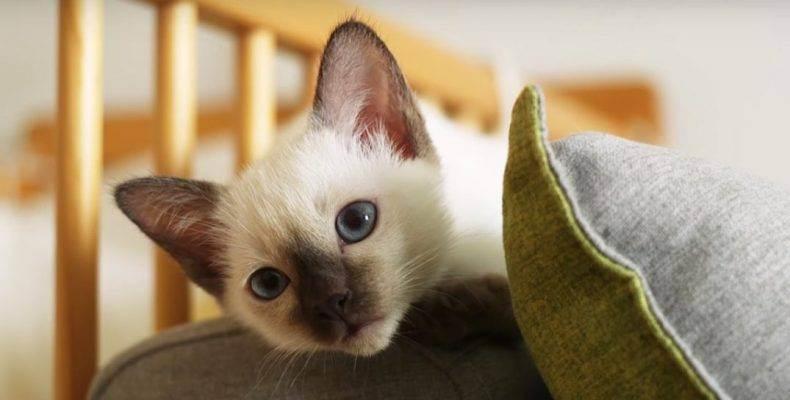 Первые часы кошки после стерилизации: как она выходит из состояния наркоза?