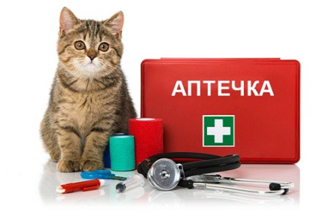 Домашняя аптечка для кота: собираем сами