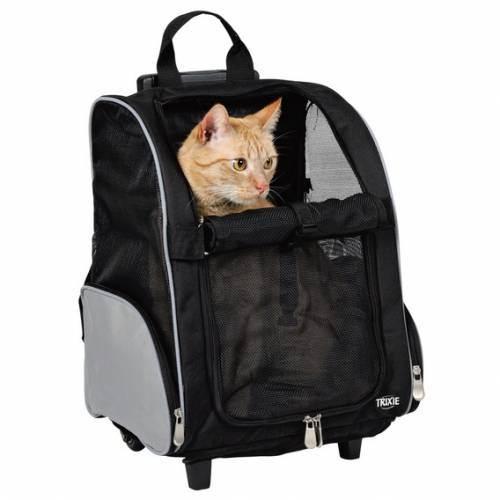 Путешествие с домашними животными: особенности перевозки, правила и общие рекомендации
