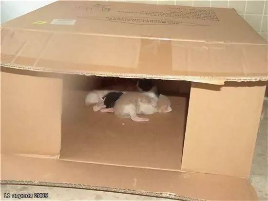 Как помочь кошке при родах - кошки