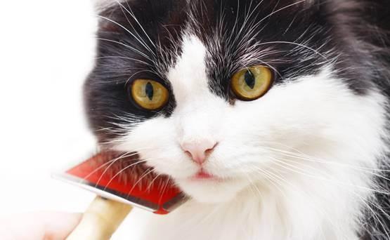 Как избавиться от шерсти кошки в квартире - полезные рекомендации