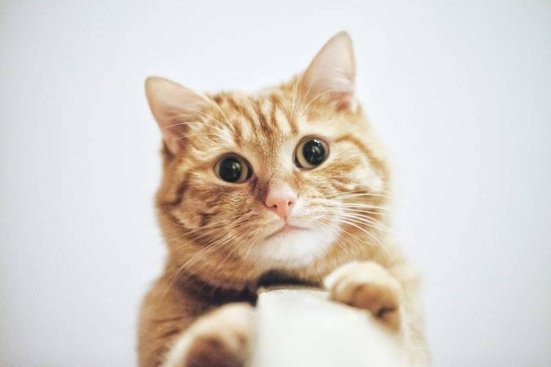 Если котенок трясется. кот дрожит — полный список причин от ветеринара
