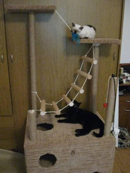 Поделка кошка - 120 фото лучших вариантов поделок сделанных своими руками (инструкция + мастер-класс)