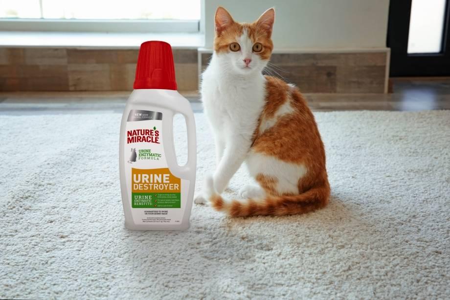 Запах пота кошачьей мочи: причины, народные средства и как избавиться дискомфорта