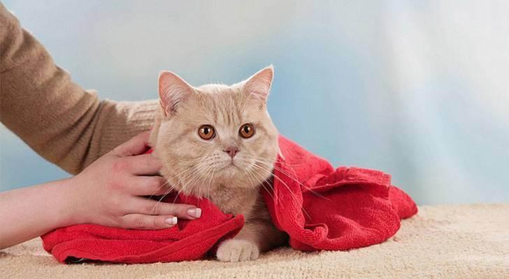 Можно ли кошек сушить феном. как сушить кота после купания