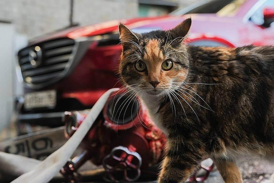 Диабет у кошек - симптомы, лечение, препараты для животных