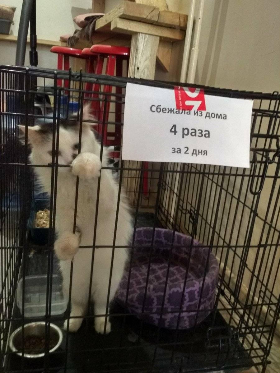 Как правильно наказывать кошку или кота - oozoo.ru
