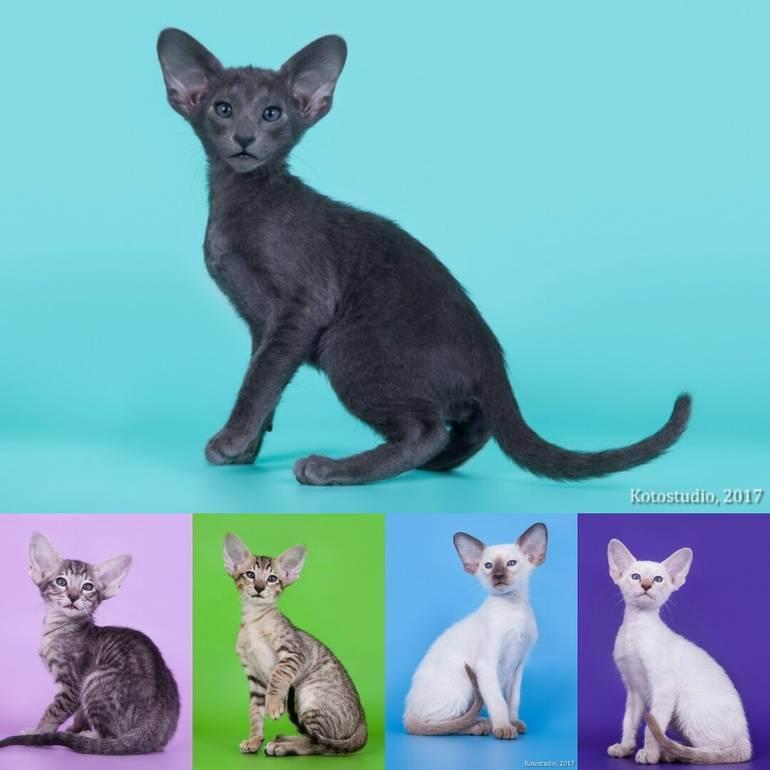Документы на кошку или немного о зообюрократии