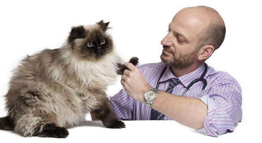 Как выбрать ветеринарную клинику?