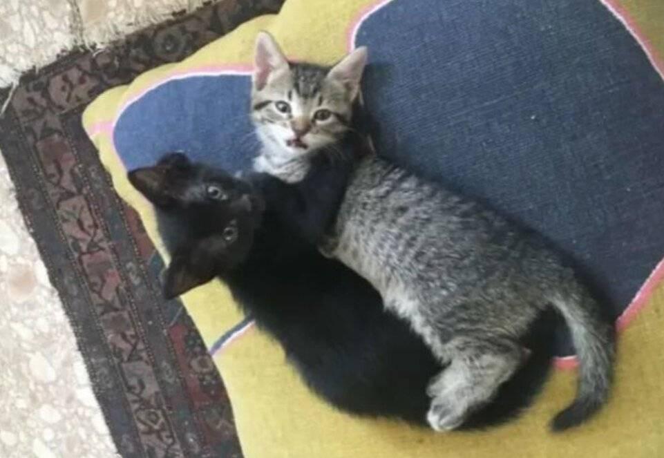 10 причин завести кота: стоит ли заводить кошку, почему люди это делают?
