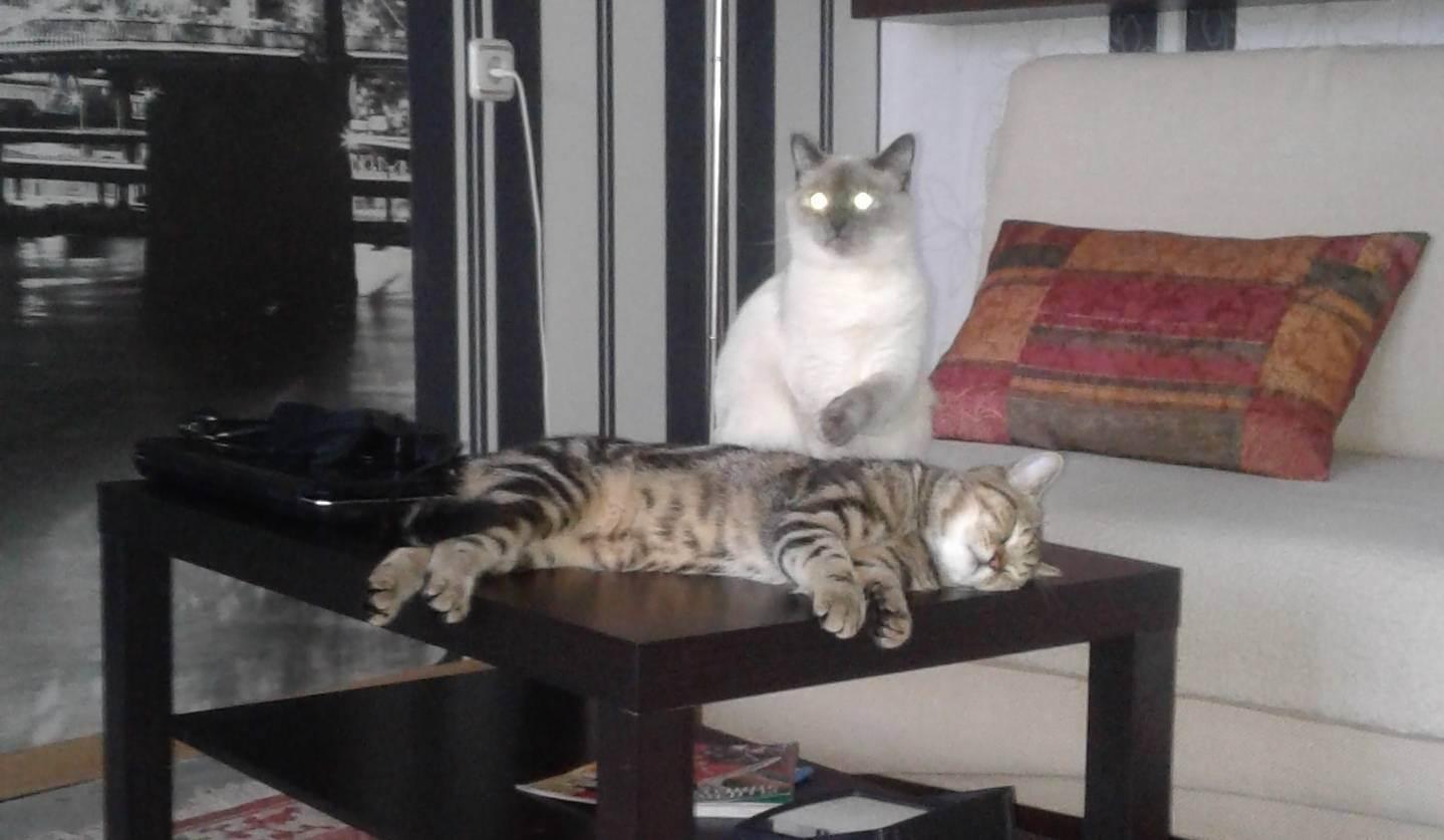 Можно ли кошкам есть маслины. почему коты любят оливки? стоит ли угощать питомца оливками