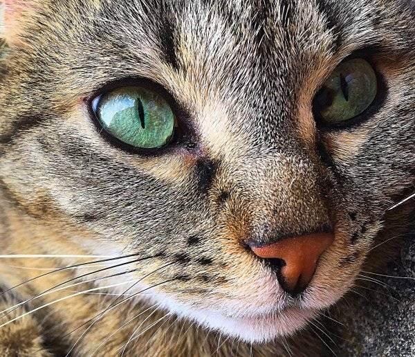 Почему кошка храпит и что делать