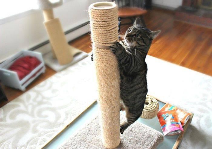 Как приучить котенка к когтеточке: в 2 или 3 месяца с помощью мяты