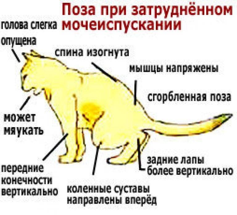 Кот вялый, много спит, и мало ест: что делать, если животное угнетенное и без аппетита