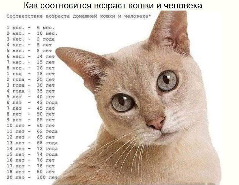 Считаем, сколько коту лет на самом деле