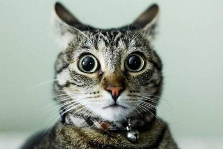 Почему коты пукают и как с этим справиться - oozoo.ru