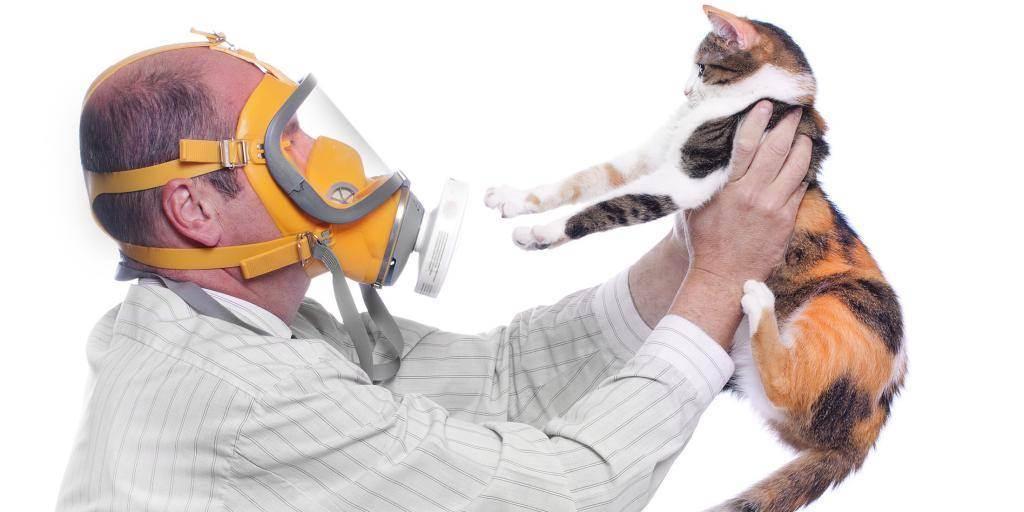 Порода кошки для аллергиков - запись пользователя юлия (id980943) в сообществе домашние животные в категории кошки. болезни, прививки, советы по уходу - babyblog.ru