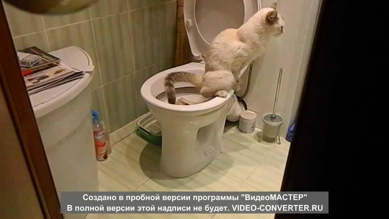 Как часто должен какать 1 месячный котенок  