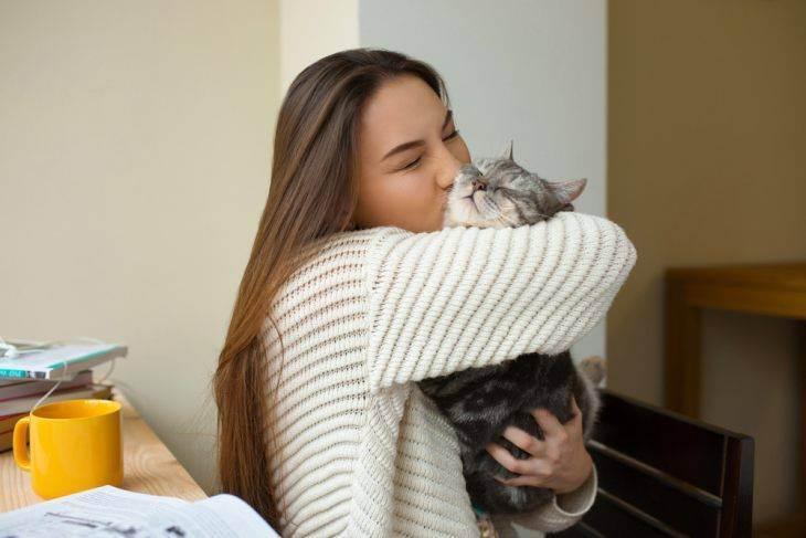 Цистит у кошек: как вылечить и предотвратить