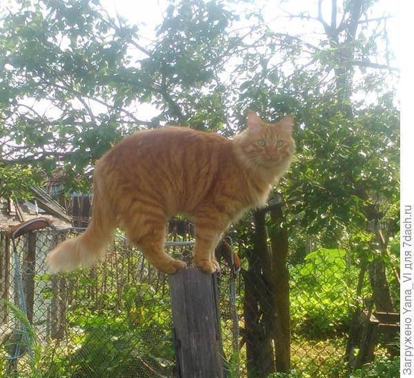 Как долго коты восстанавливаются после отравления