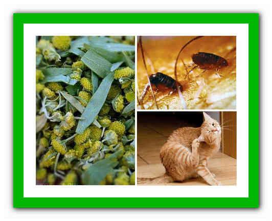 Как избавиться от блох у кошки в домашних условиях: просто и быстро
