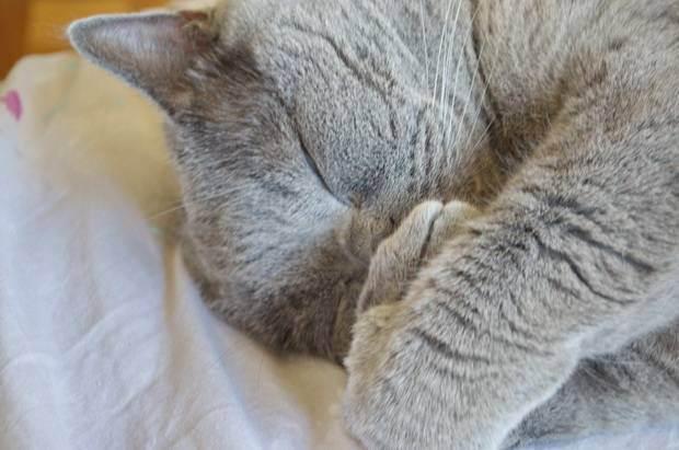 У кота кашель и сопли чем лечить
