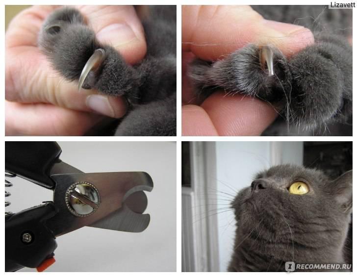 Как подстричь когти кошке и коту?