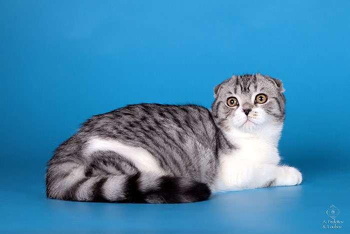 Как правильно помыть кошку в домашних условиях, если она боится воды и царапается