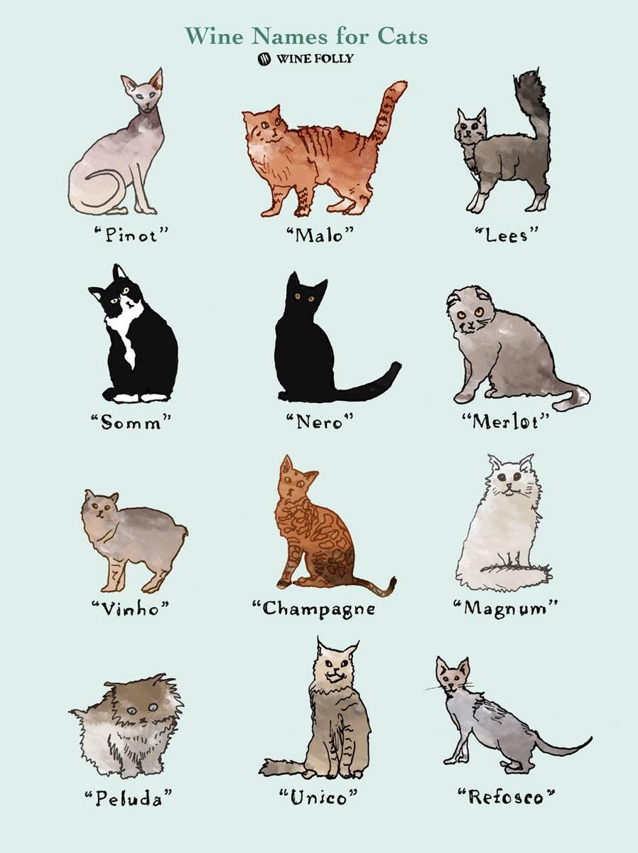 Клички для тайских кошек и котов - красивые имена для котенка мальчика и девочки.