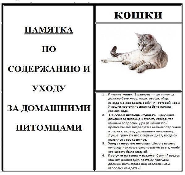 Почему кошки всегда хотят есть. кошка постоянно просит есть