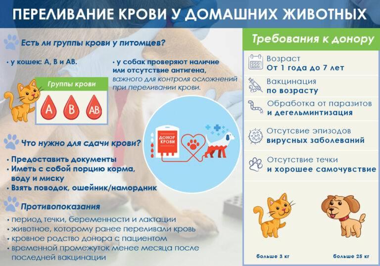 Есть ли у кошек группа крови?