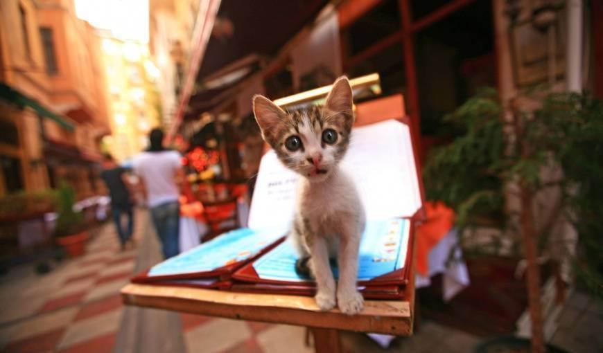Правильное питание кошки