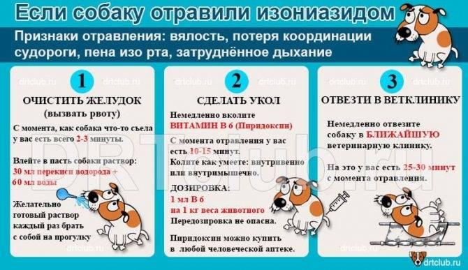Отравление крысиным ядом у кошек - zhivomag