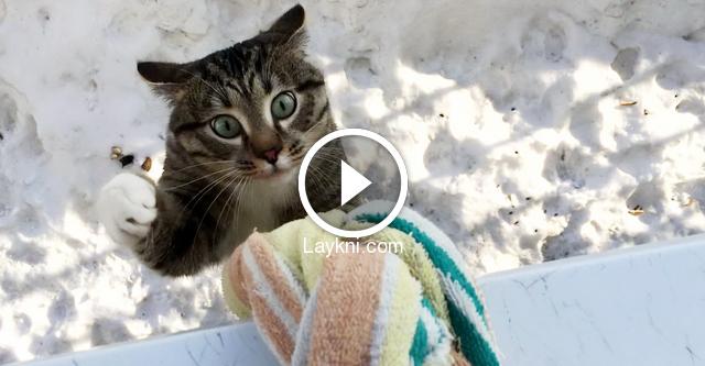 Невероятные возвращение кошек домой. как потерявшиеся коты находят дорогу домой коты которые возвращаются домой