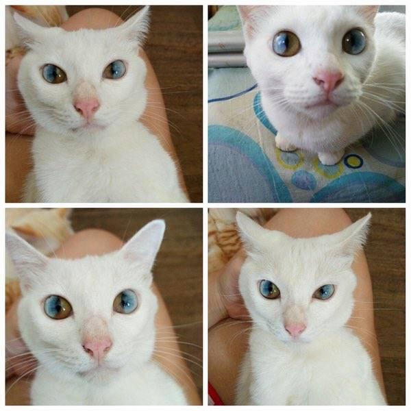 Котёнок появился в доме.вопросы о котятах
