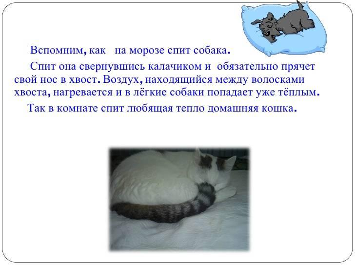 Для чего коту нужен хвост?
