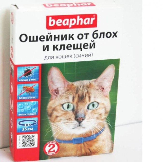 Ошейник от клещей и блох для кошек и котят: какой выбрать, принцип действия, отзывы