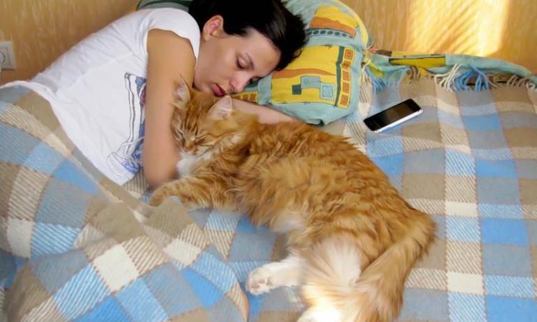 Почему по приметам кошка спит в постели хозяина