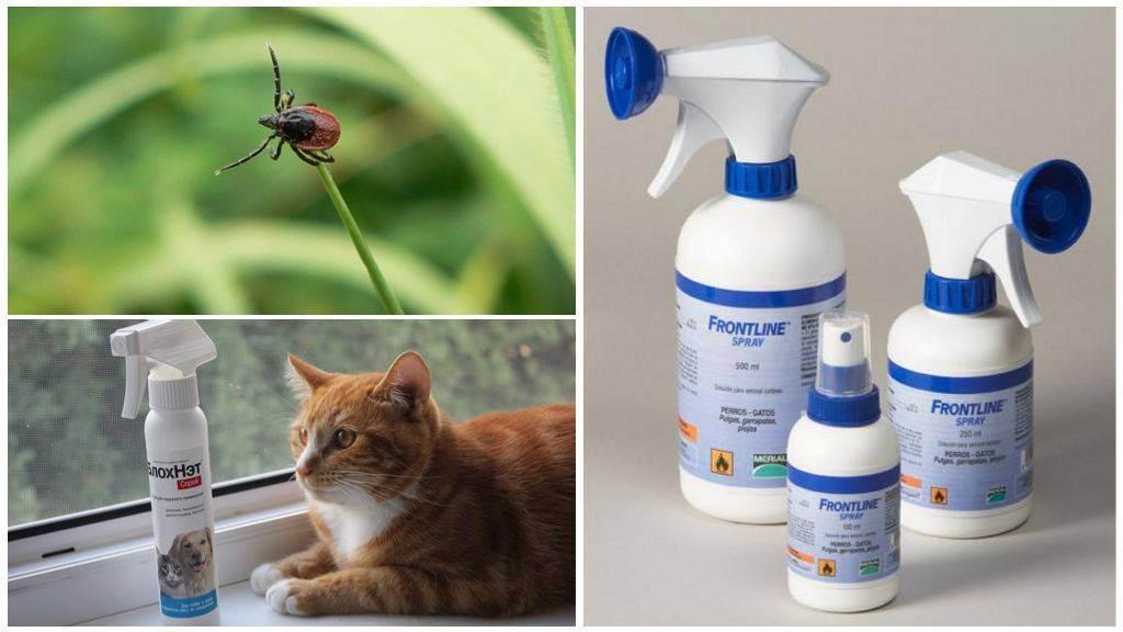 Несколько простых способов выведения блох у кошек самостоятельно дома